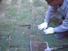芝生の施工費と管理