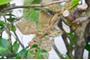 庭木の消毒―害虫対策