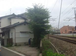太宰府市 桜の木の伐採と抜根