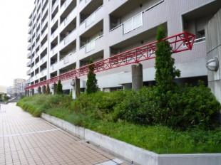 福岡市博多区吉塚 ステーションアヴェニュー様 定期植栽管理