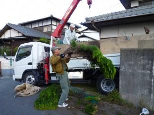 福岡市東区奈多 Y様邸 伐採工事