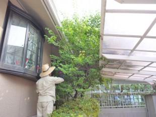 福岡市南区老司 M様邸 剪定工事