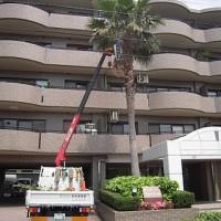 福岡市西区 Rマンション 定期植栽管理
