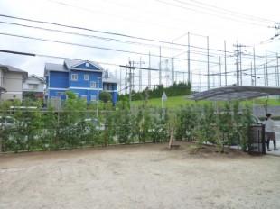 筑紫野市美しが丘南 M様邸 植栽生垣工事