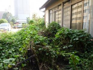 博多区美野島 M様邸 庭木の管理