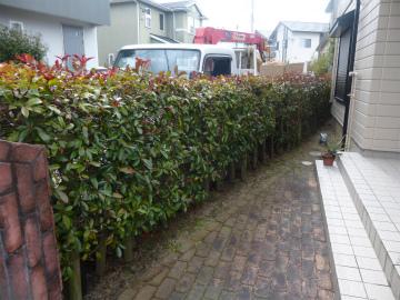 福岡県太宰府市の宮原福樹園では、庭木の剪定から消毒・除草・害虫駆除やエクステリアまで承っております。