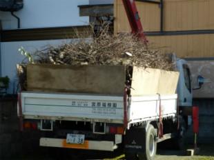 久留米市 伐採工事