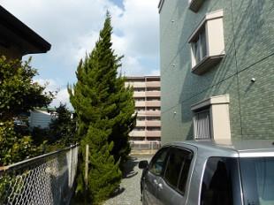 筑紫野市 マンションカイヅカ伐採作業