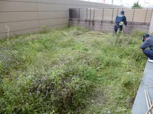 東区和白 マンション専用庭芝生張り作業