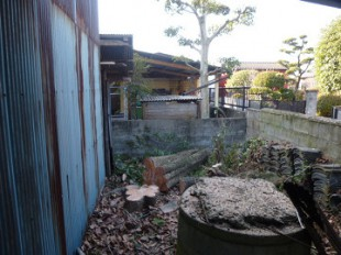 鳥栖市 高木伐採作業