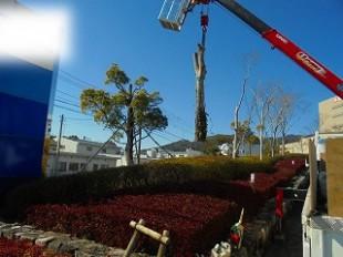 ゴンドラクレーンによる吊り切り伐採作業