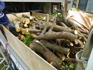 落とした枝も切りそろえて積載していきます。