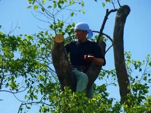 最後は大きな枝も伐採致しましたので養生をおこないます。
