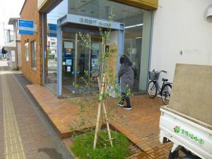 大野城市 植栽 福岡銀行南ヶ丘支店