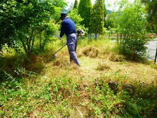 草刈り作業中