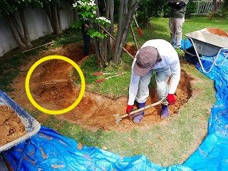 画像:根周り掘り出し作業